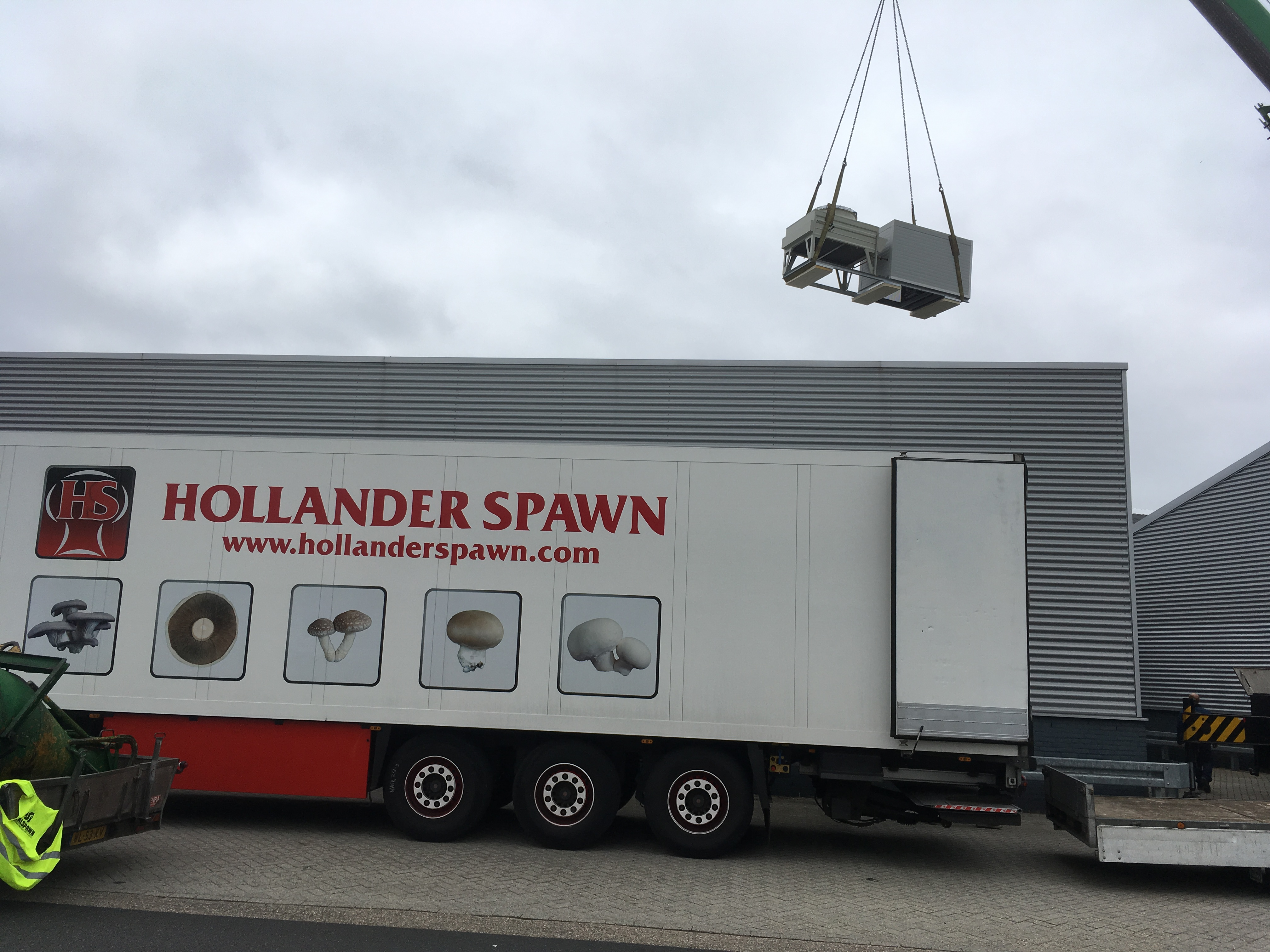 Hollander Spawn Goes Green