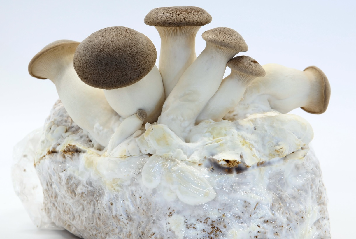 Mushrooms in Burgers